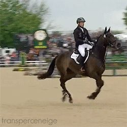 And he just won gold at the 2016 Olympics for the second time in a row!!! He is such a fantastic rider...