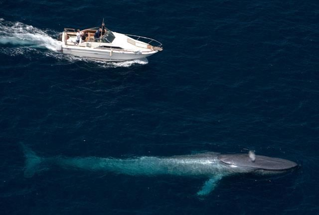 Image Gallery largest whale ever caught