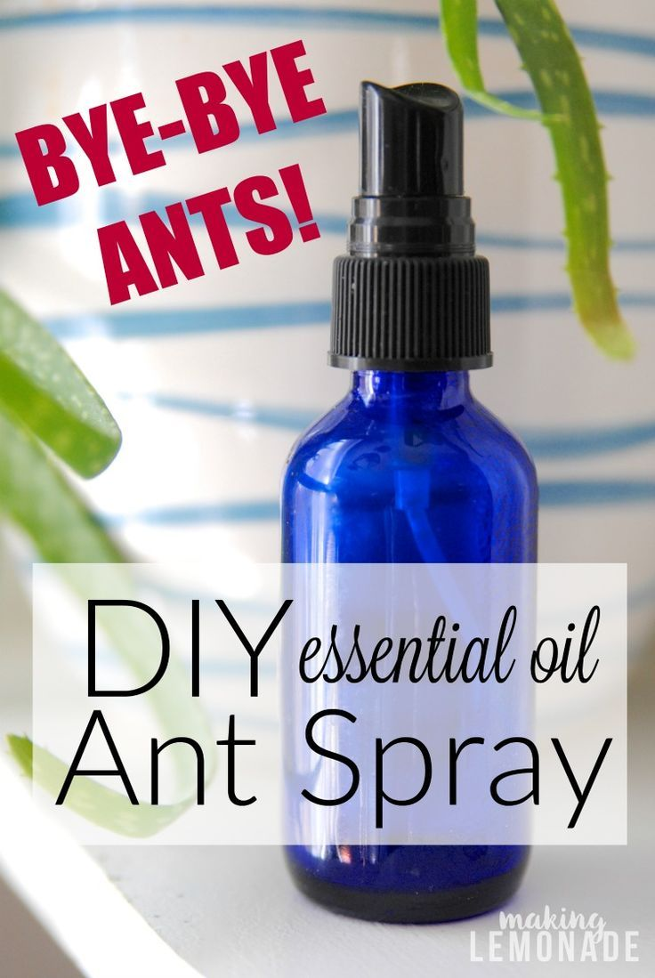 how to get rid of ants naturally (DIY Ant Spray with Essential Oils)-- so easy and safe around kids!