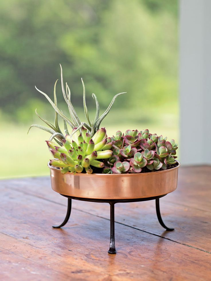 Copper Plant Tray Extra Small Round 8in