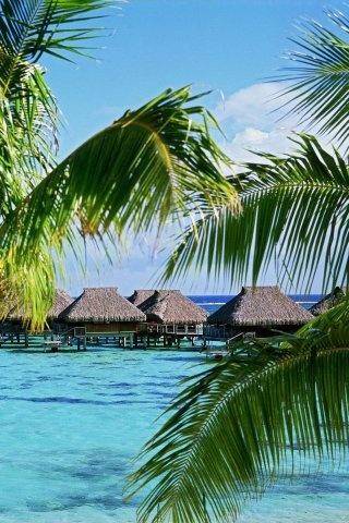 MOOREA ISLAND - FRENCH POLYNESIA.  SOUTH PACIFIC