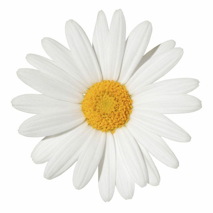 Pretty Daisy Tattoo: Daisy Tattoo, Daisy Tumblr, Daisy Love