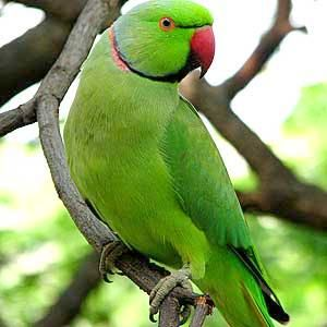 36 best images about Parrots on Pinterest | Beautiful ...
