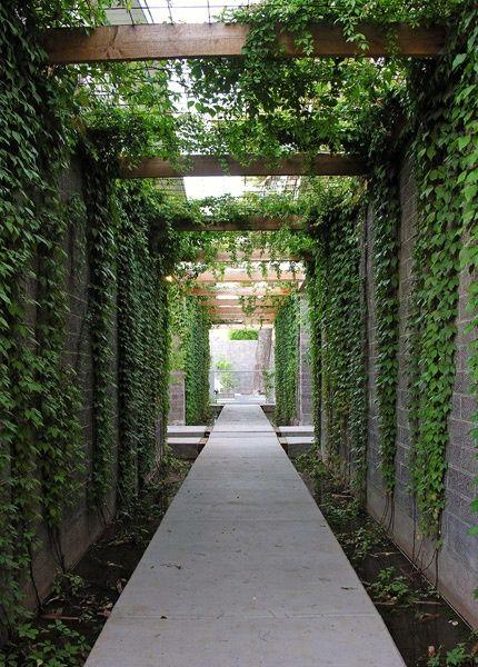 Contemporary steel & timber pergola draped in Boston Ivy