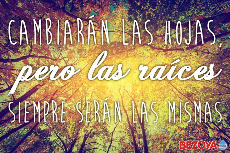 Cambiarán las hojas, pero las raíces siempre serán las mismas. #bezoya, agua, inspiración, frases, árboles, bosque, otoño
