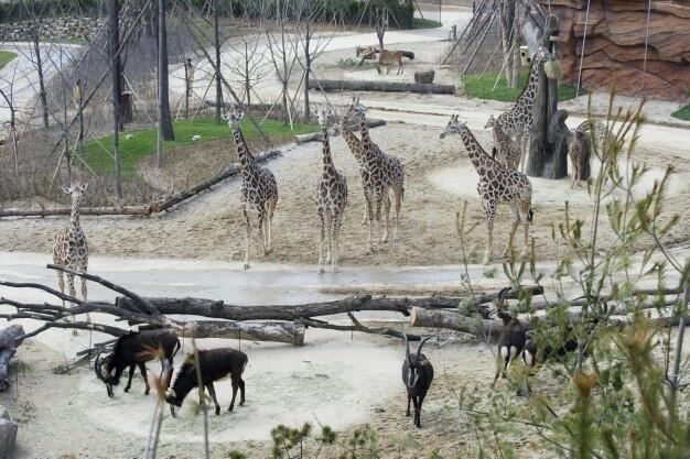1만 2천평 부지에 20종 150마리 동물 자연친화형 생태 전시    (Everland safari adventure 'Lost Valley' in Korea)