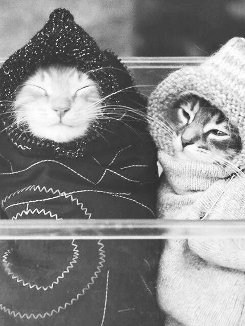 purritos-- I can't stand the cuteness!!!