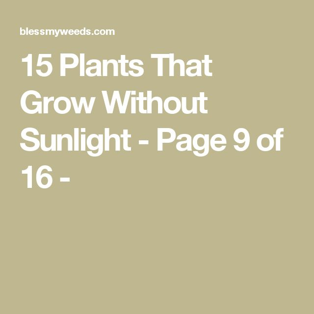 15 Plants That Grow Without Sunlight - Page 9 of 16 -