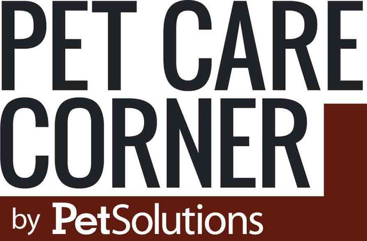 Cat and Kitten Territorial Marking Problems and Solutions - Pet Care Corner