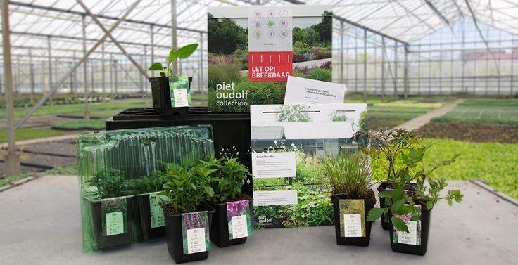 Iedere collectie bestaat uit acht vaste planten en één siergras die zowel in de volle grond als in potten op terras of balkon zullen uitgroeien tot een lust voor het oog. Ga genieten van de pracht van de natuur in je eigen tuin.