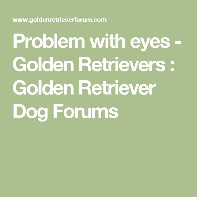 Problem with eyes - Golden Retrievers : Golden Retriever Dog Forums