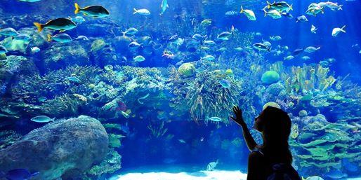 World Aquarium St Louis Missouri Pinterest World