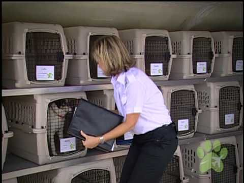 What is Pet Airways? Pet Airways is a pet-only airline where pets fly in the main cabin, not in cargo. We offer pet travel for dogs and cats from Los Angeles, Phoenix, Denver, Omaha, Chicago, New York, Baltimore/Wash DC, Atlanta and Ft. Lauderdale.