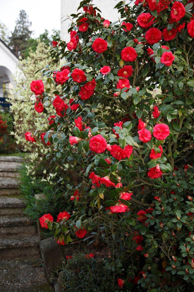 1132 best c flowers images on pinterest beautiful