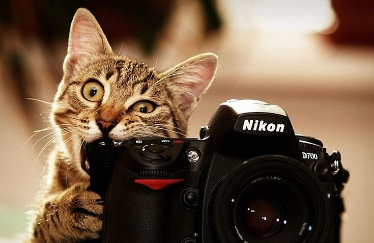 Animals-Getting-Comfortable-With-Camera-Gear-5