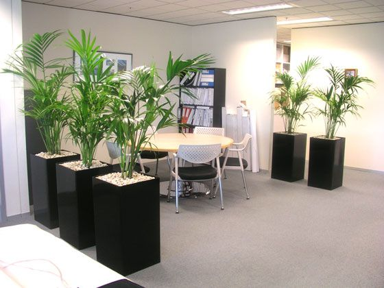 32 best images about office plants on pinterest