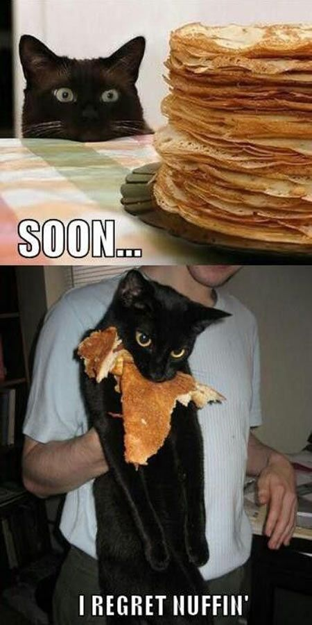 hahaha...the cat's look said it all...