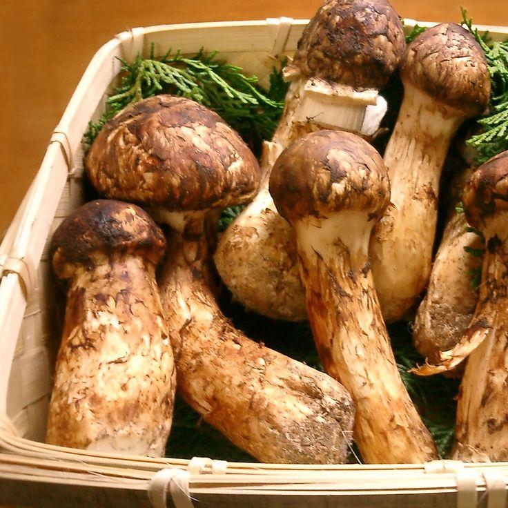 how to grow pine mushrooms