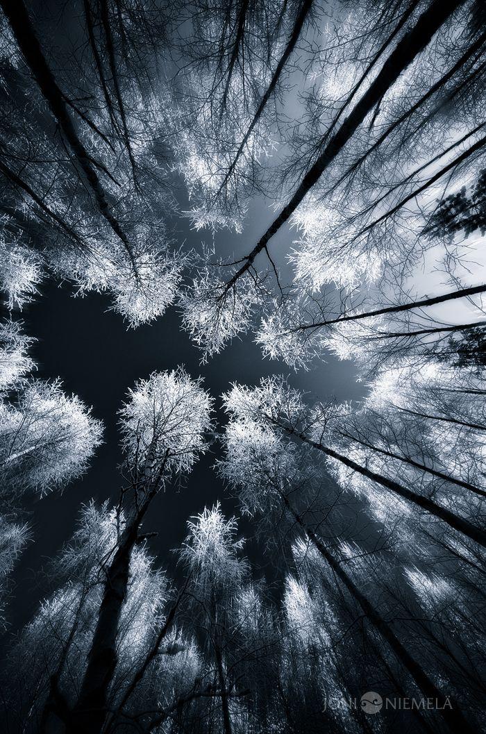 Black Woods by Joni Niemelä #Photography #Woods