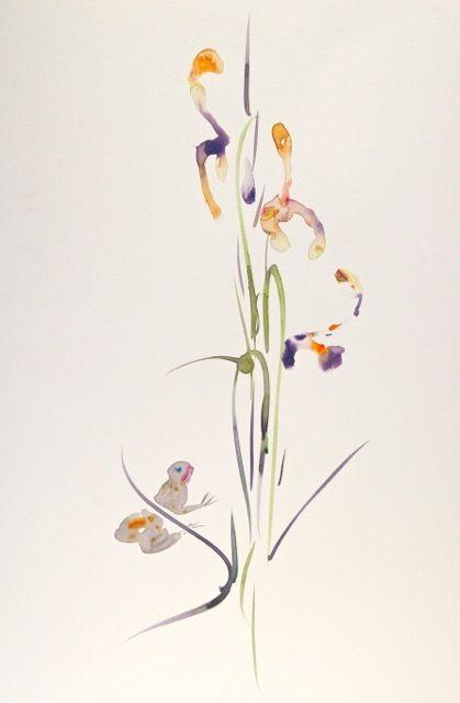 'Iris + Frog' 2011.