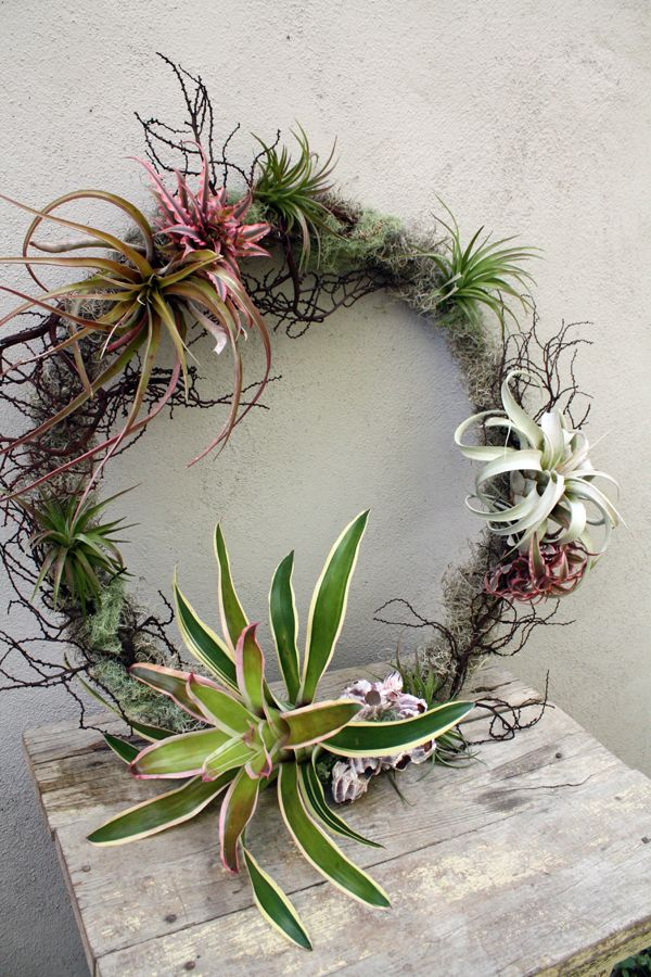 crosspollination: tillandsia and bromeliad wreaths