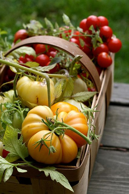 """""""The Last of the Tomatoes. 