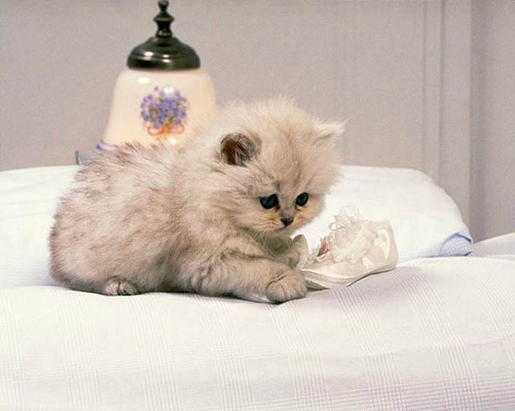 Cat Wallpaper Pictures
