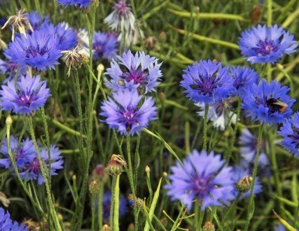 plante medicinale pentru boala articulară)