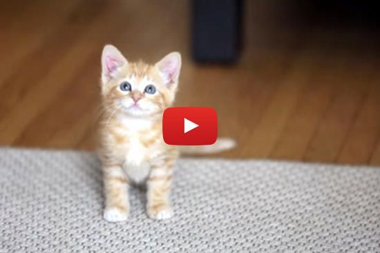 Dear Kitten Little Gets A Welcome Letter From His
