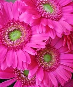 Flowers and Gardens: I love pink flowers