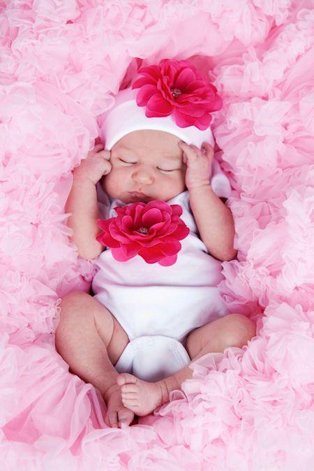 25 best ideas about hot pink roses on pinterest hot. Black Bedroom Furniture Sets. Home Design Ideas