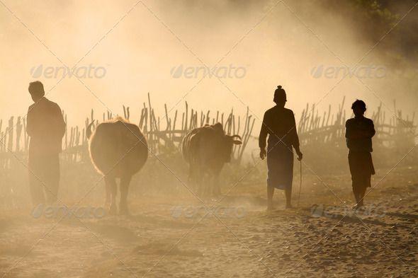 Cattle dealers in remote village in Putao, Myanmar (Burma). by Maciejbledowski. Cattle dealers in remote village in Putao, Myanmar (Burma).