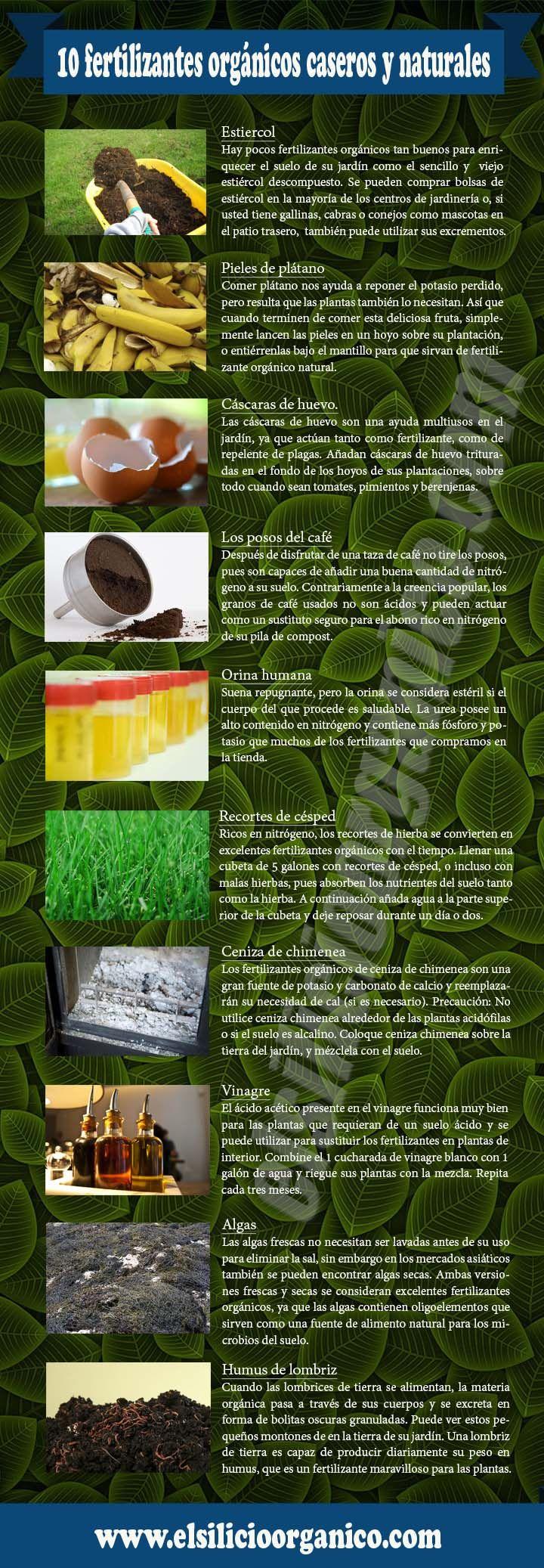 Plantas En Casa, Plantas Plantas, Jardin Plantas, Mini Plantas, Ideas De Plantas, Riego Plantas, Plantas Terrazas, Infografia Plantas, Naturales Infografia