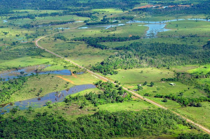 environment of the amazon rainforest The amazon rainforest climate on average is like that of any other typical tropical rainforest it is hot and humid the temperatures are around 28°celcius for the entire year which gets compounded due to the heavy humidity.