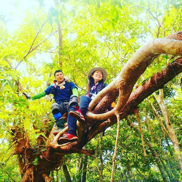 【nijiiro.sakana.kato】さんのInstagramをピンしています。 《まだ知らない石垣島の景色を求めて絶景トレッキング  倒木のアーチを抜けるはずが、やっぱりみんなで登ってしまいました⭐ #石垣島 #沖縄 #自然 #登山 #トレッキング #森 #絶景 #島 #離島 #okinawa #ishigaki #trekking #forest #nature #mountain #islands  #にじいろのさかな石垣島 #絶景トレッキング》