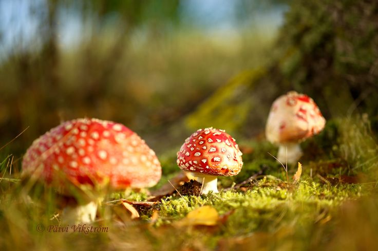 Fairytale Forest by Päivi Vikström on 500px