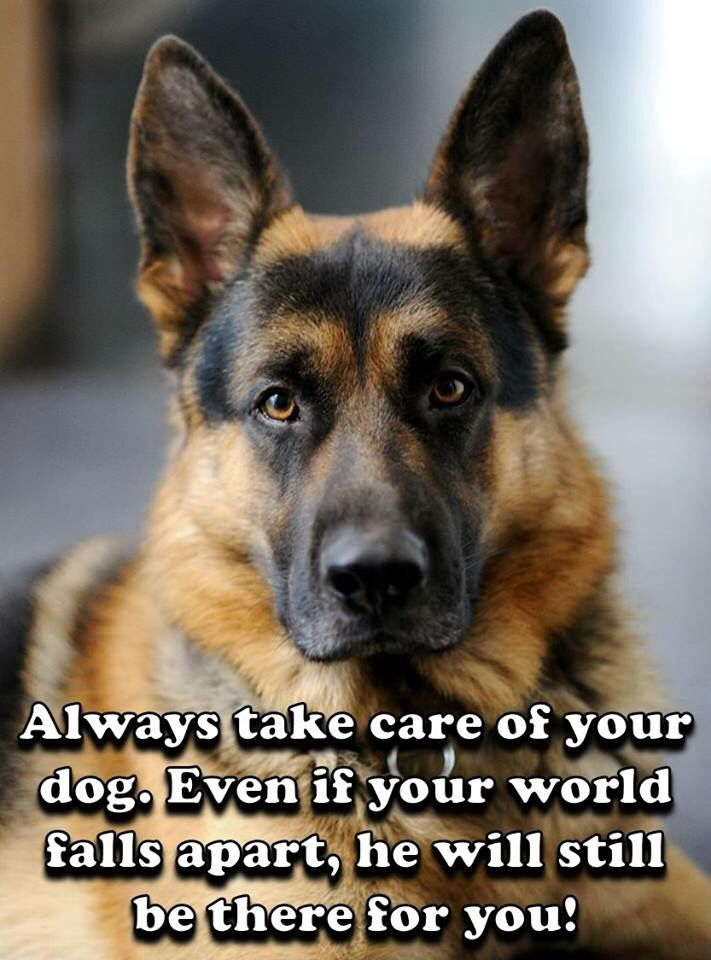 """The German Shepherd Hope you're doing well.From your friends at phoenix dog in home dog training""""k9katelynn"""" see more about Scottsdale dog training at k9katelynn.com! Pinterest with over 20,600 followers! Google plus with over 170,000 views! You tube with over 500 videos and 60,000 views!! LinkedIn over 9,300 associates! Proudly Serving the valley for 11 plus years"""