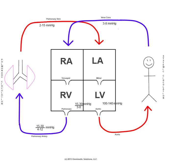 Schematic Diagram Of Heart Circulation