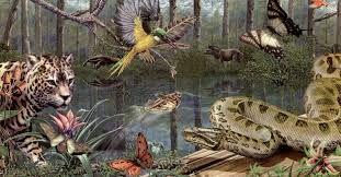 El bosque semiombrófilo es propio de regiones en las que algunos meses al año las precipitaciones son menos abundantes.