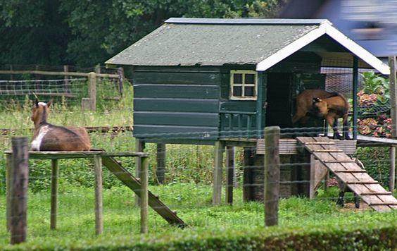 goat shelters | Goat House... Love the raised platform | Farm Goat Shelters