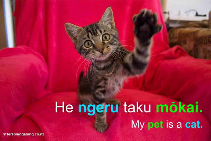 Te Reo ~ my pet is a cat poster
