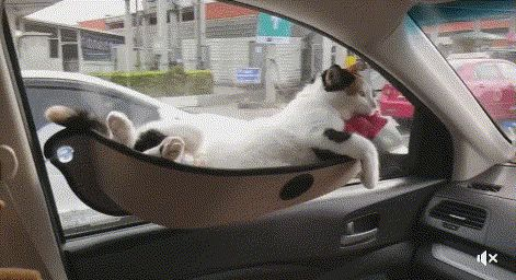 Kitter transport