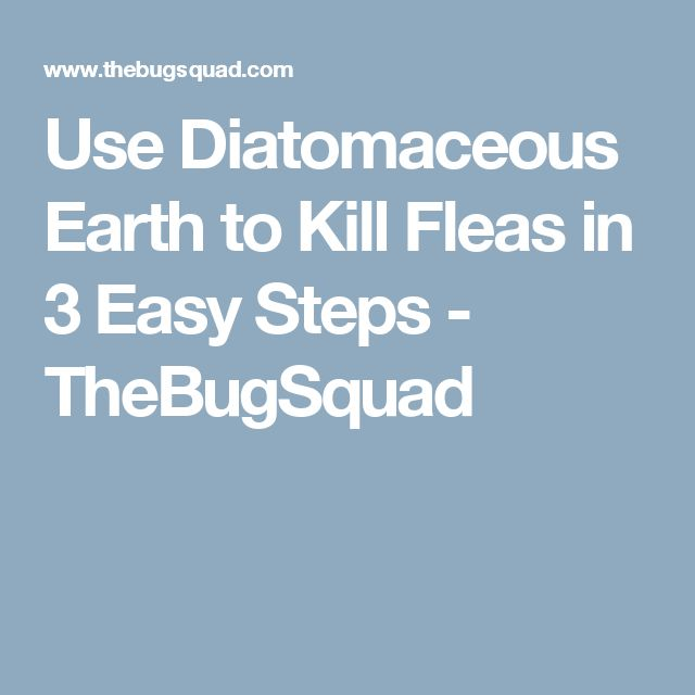 Use Diatomaceous Earth to Kill Fleas in 3 Easy Steps - TheBugSquad                                                                                                                                                      More