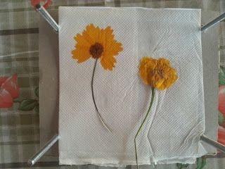 le idee di pizzipazzi - pressa per fiori