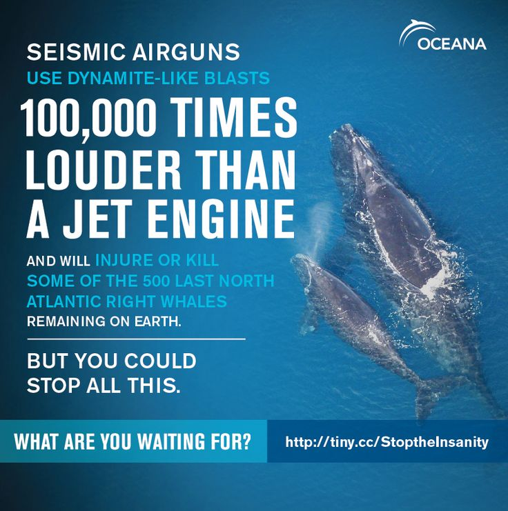 Seismic airgun testing has been delayed, buying some precious time for tens of thousands of dolphins and whales. But we aren't satisfied with a delay, we need seismic testing REJECTED! Please sign and share our petition!