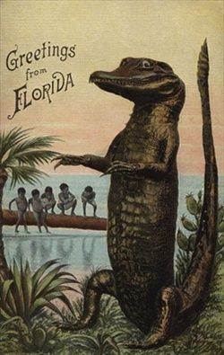 Florida Fresh & Other Slices