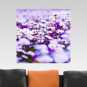Daisies - #Canvas #wallpanels #telapittorica