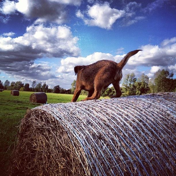 Puppy on Haystack Instagram photo by Solopress