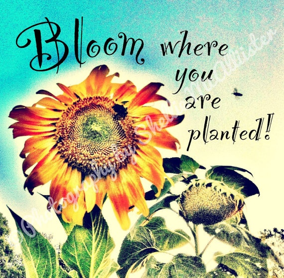 Whimsical Sunflower Metallic Print With Quote Bloom Where You Are