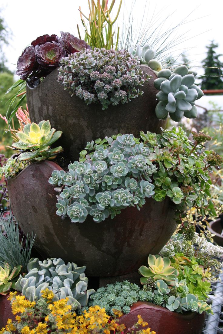 Succulents Dig Nursery Contained Pinterest Gardens